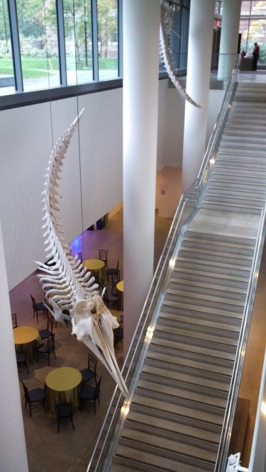 Whale skeletons above the hallway from the Northwest building entrance to the B-100 space.